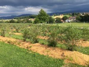 Bio Heidelbeer Land