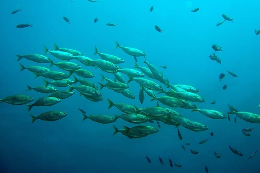 Hochwertiger Fisch für Kinder