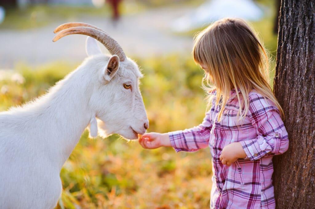 Kitakoch_Blog BIO Erlebnisbauernhof_Kind mit Ziege
